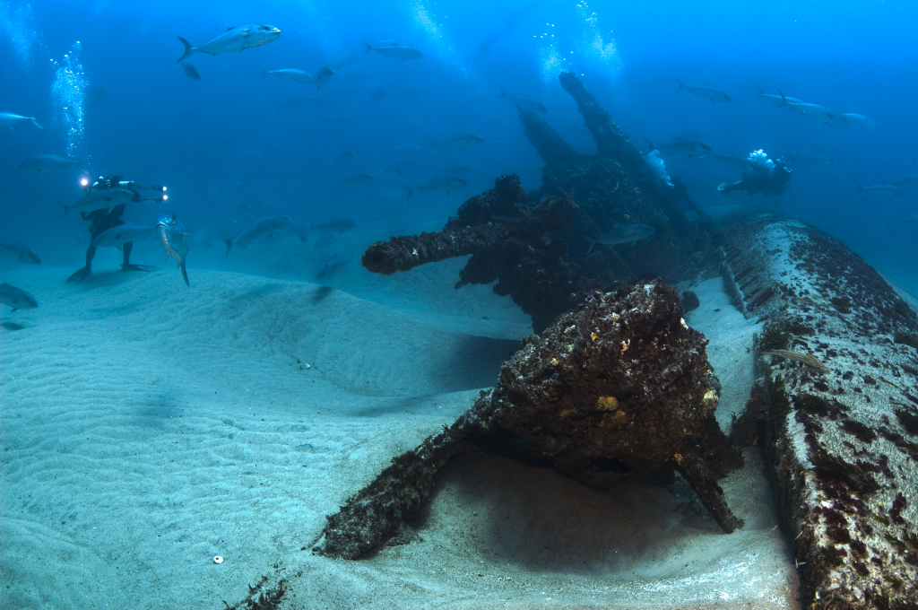 Biological Communities Studied At Historical WWII Shipwrecks Along North Carolina Coast