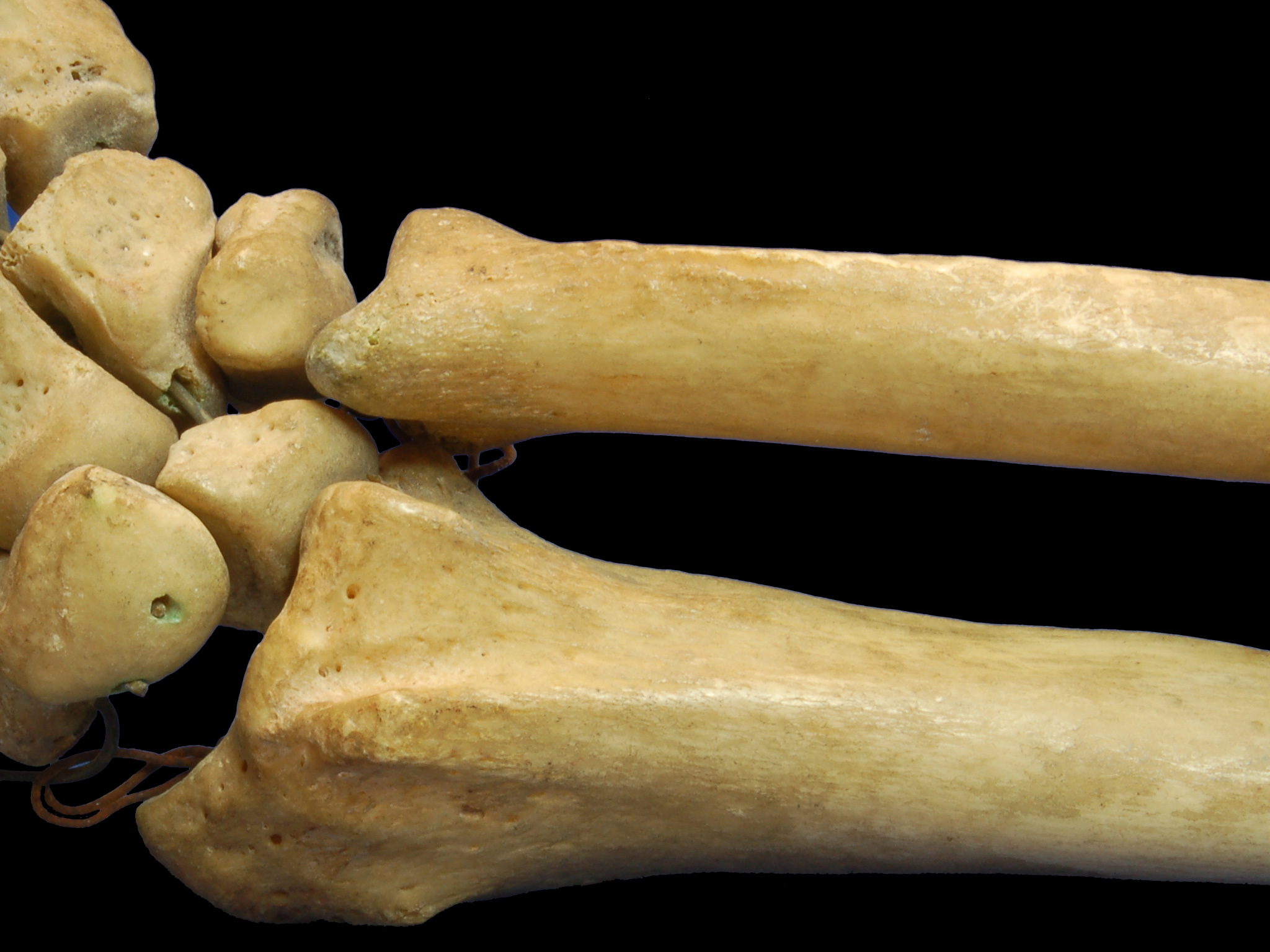 Analytical standards needed for 'reading' Pliocene bones