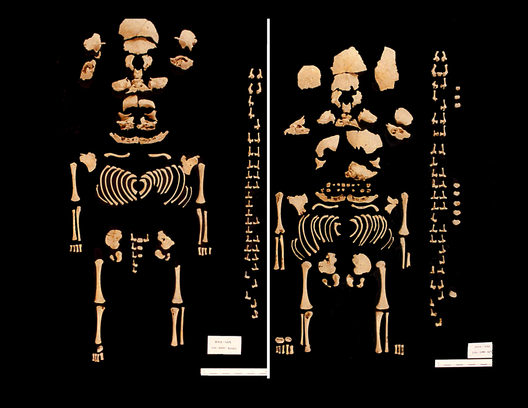 The first Prehistoric Iberian twins have been found