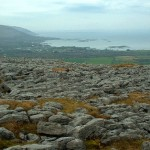 Discovery gives rare insight into the Irish Bronze Age