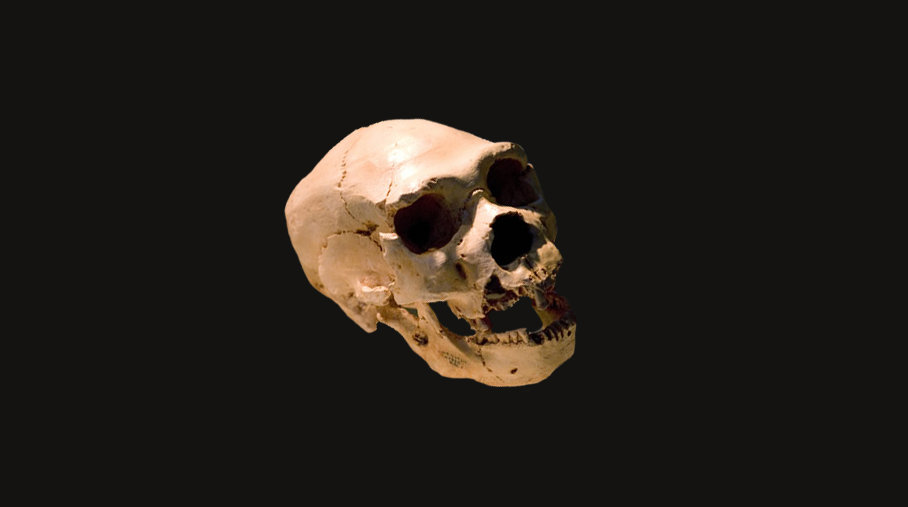 Fossil skull from Sima de los Huesos in Spain has many Neanderthal features