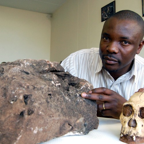 New Sediba fossils found in rock