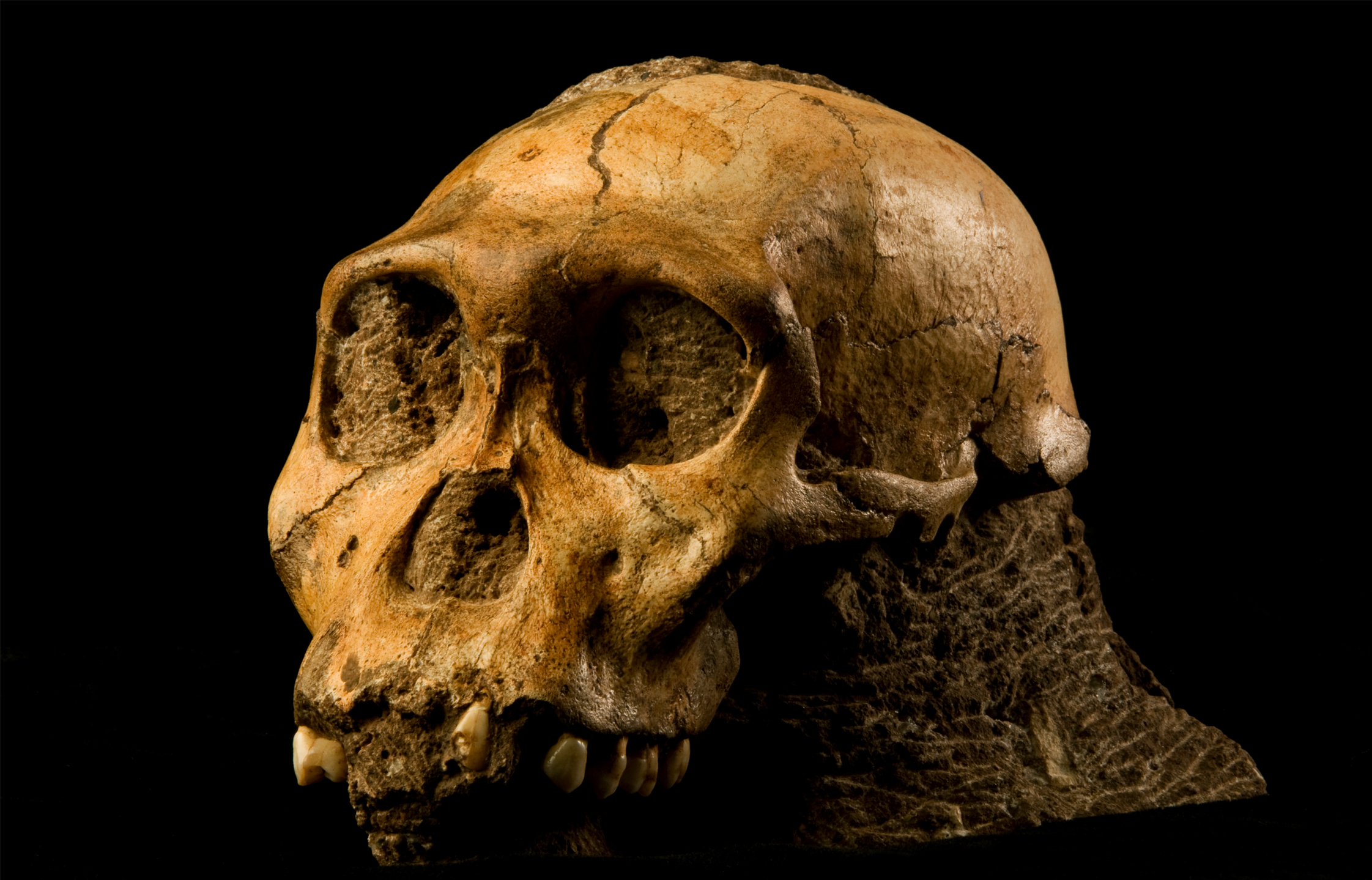 Early human ancestors had more variable diet