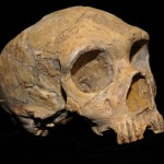 Volcanic cryptotephra gives clues to Neanderthal demise