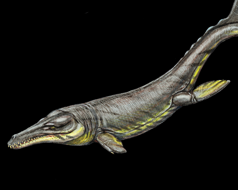 Ancient crocodiles ate like killer whales