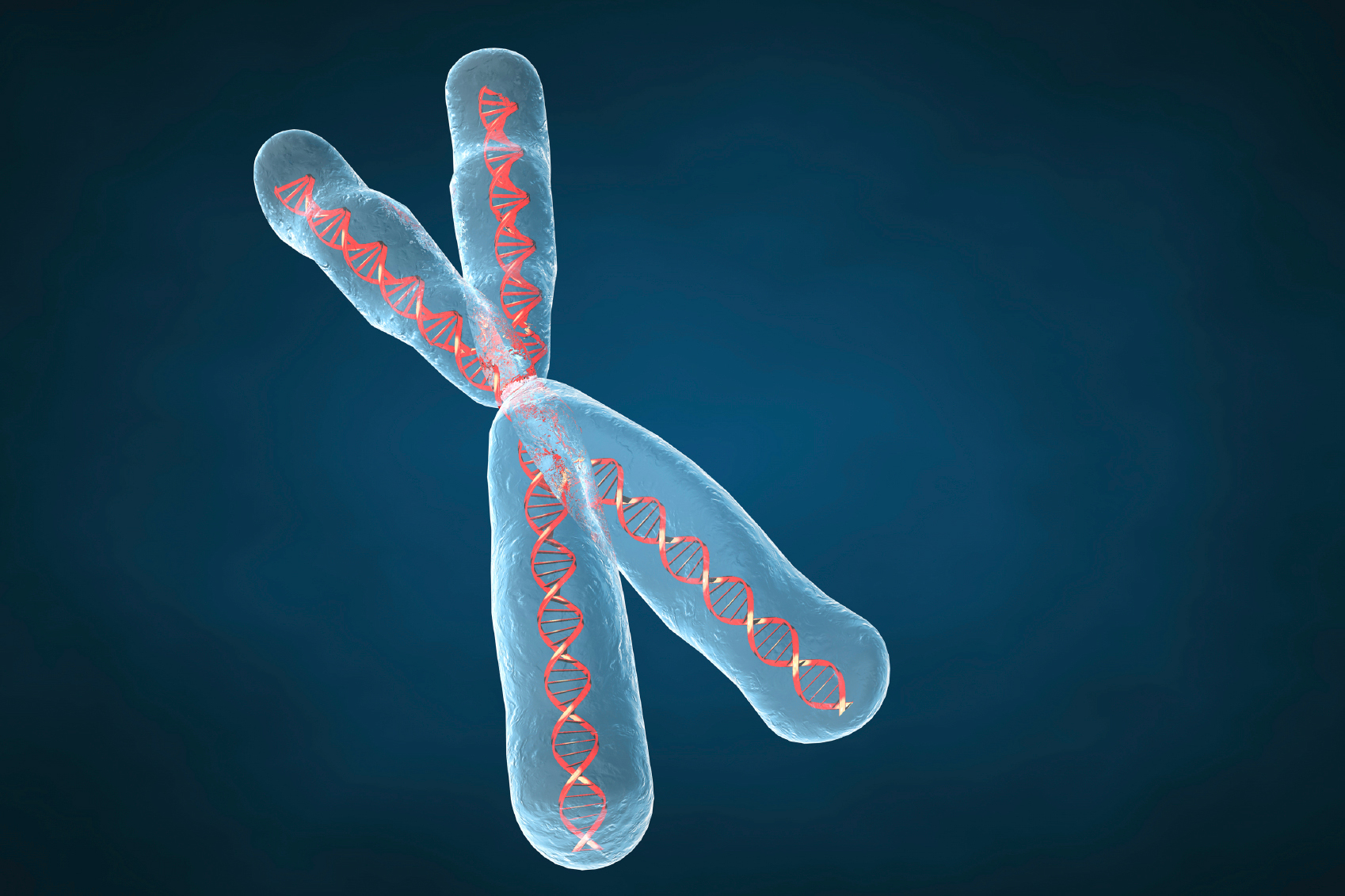 Human chromosome much older than previously thought