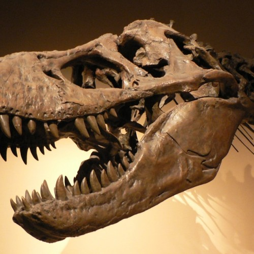 How mass extinctions drove the evolution of dinosaurs