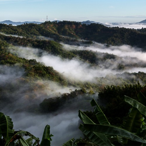 Rainforests in Far East shaped by humans for the last 11,000 years