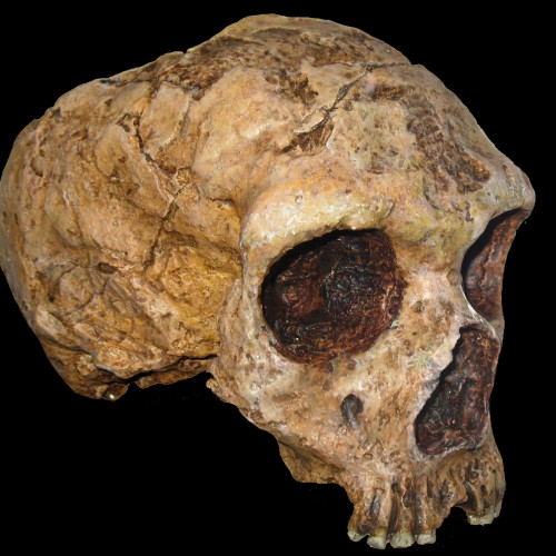 Neanderthals' genetic legacy