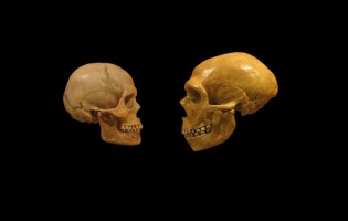 Neanderthals and Cro-magnons did not coincide on the Iberian Peninsula