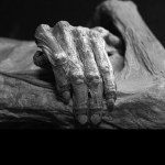 Who Owns the Bones? Should Bodies in Museum Exhibits be Returned Home?