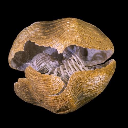 Counting calories in the fossil record