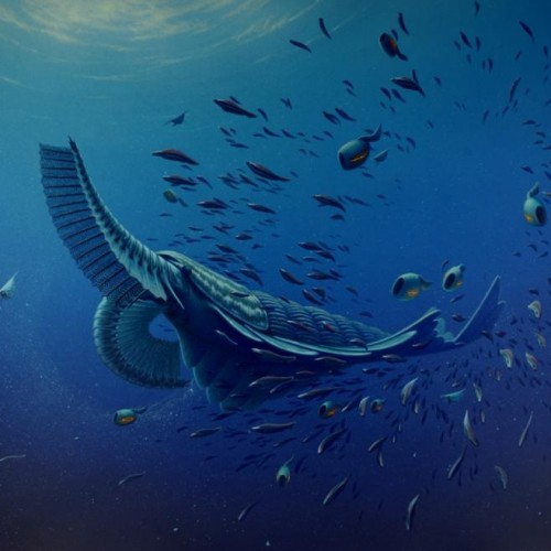 Ancient sea creatures filtered food like modern whales