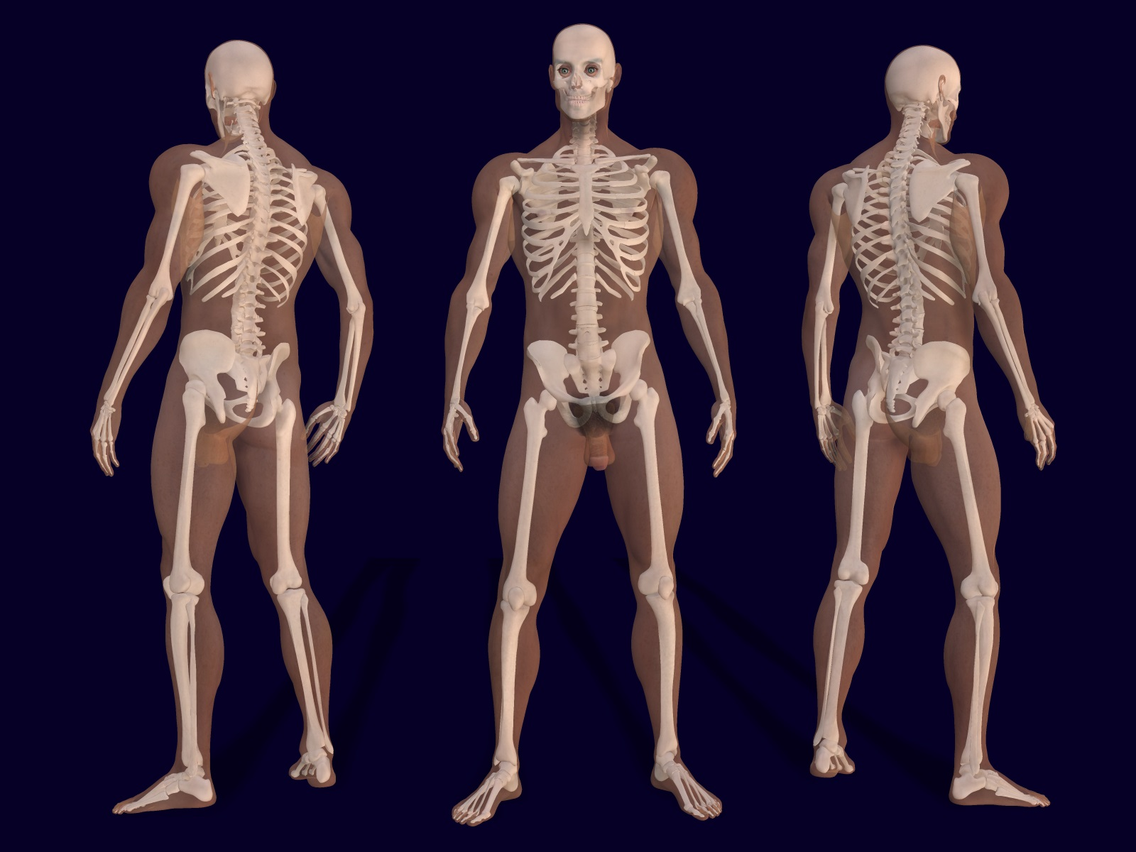 anthropology – page 7 – heritagedaily – heritage & archaeology news, Skeleton