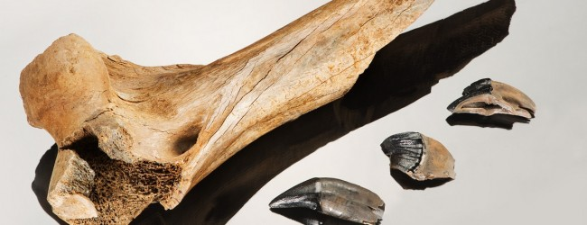 Humans and saber toothed tiger met at Schöningen 300.000 years ago