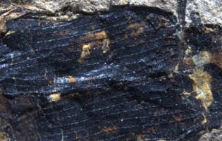 Fossil palm beetles 'hindcast' 50-million-year-old winters