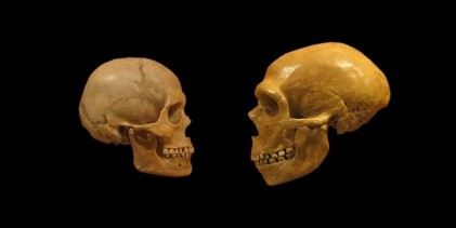 Study questions Neandertal inferiority to early modern humans
