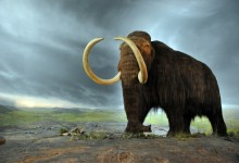 Domestication of Dogs May Explain Mammoth Kill Sites and the Success of Early Modern Humans