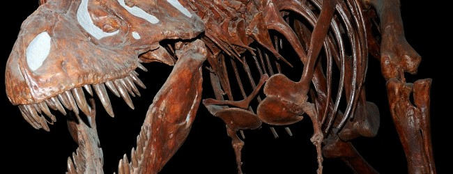 All teeth and claws? New study sheds light on dinosaur claw function