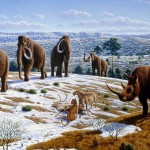 Climate not to blame for the disappearance of large mammals