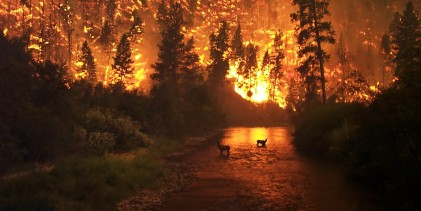 What a 66-million-year-old forest fire reveals about the last days of the dinosaurs