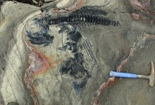 One of the World's Most Significant Finds of Marine Reptile Fossils from the Cretaceous Period