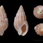 What Amino Acids in Shells tell us About Bronze Age People