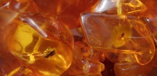 Decades-old amber collection offers news views of a lost world