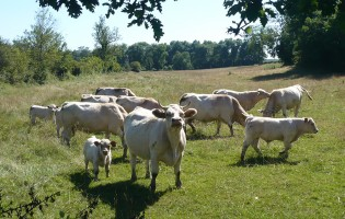 Prehistoric dairy farming at the extremes
