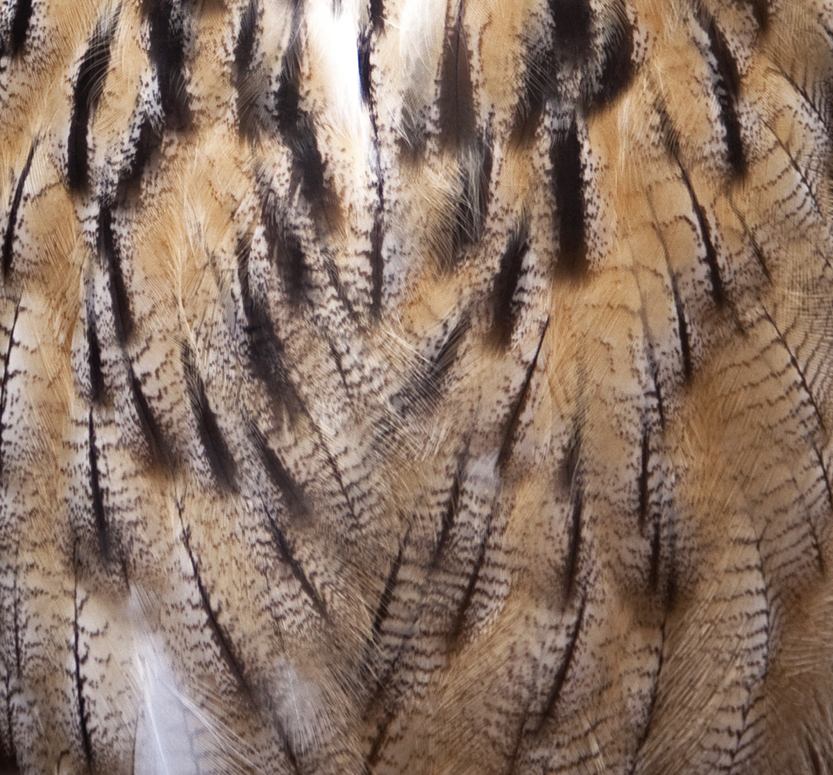 Feathers_(3974796232)