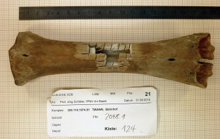DNA Find Reveals New Insights into the History of Cattle in Europe