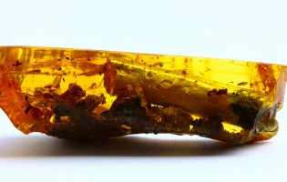 One secret of ancient amber revealed