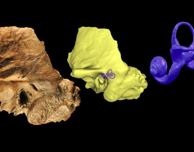 Discovery of Neandertal trait in ancient skull raises new questions about human evolution