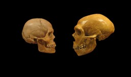 Neanderthals 'overlapped' with modern humans for up to 5,400 years