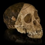 SA's Taung Child's skull and brain not human-like in expansion