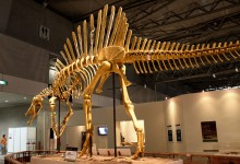 Scientists report first semiaquatic dinosaur, Spinosaurus