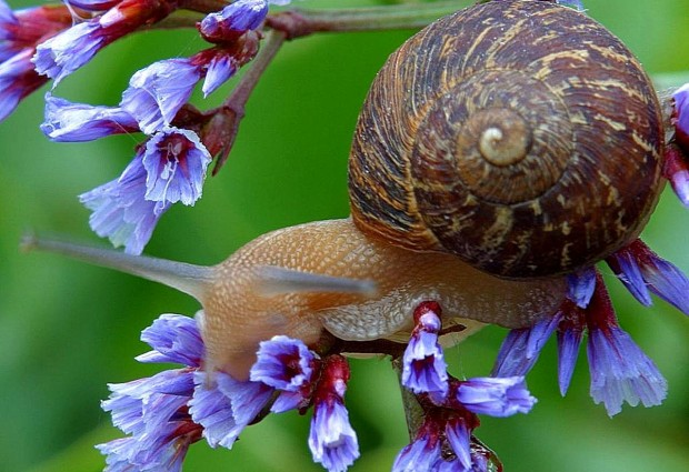 Snail shells show high-rise plateau is much lower than it used to be
