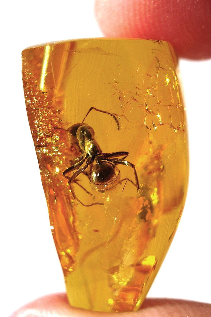 Insect trapped in amber: WikiPedia