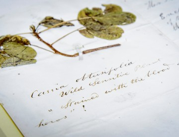Flower links civil war, natural history and 'The Blood Of Heroes'