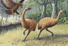 New Zealand's moa were exterminated by an extremely low-density human population