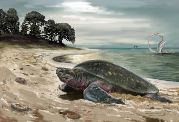 This is what the habitat of the sea turtle might have looked like 120 million years ago. © Jorge Blanco