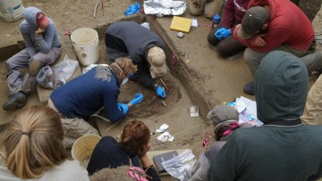 Researchers work on excavation at the Upward Sun River site in Alaska. CREDIT Photo courtesy of Ben Potter, UAF