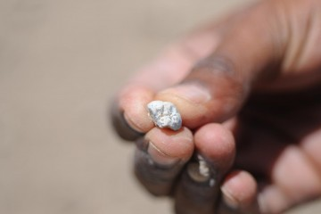 A field worker shows a fragment of a hominin tooth from Woranso-Mille, Afar, Ethiopia, one of 152 tooth fragments sampled for isotope analysis to find evidence of diet change. CREDIT : Yohannes Haile-Selassie, Cleveland Museum of Natural History