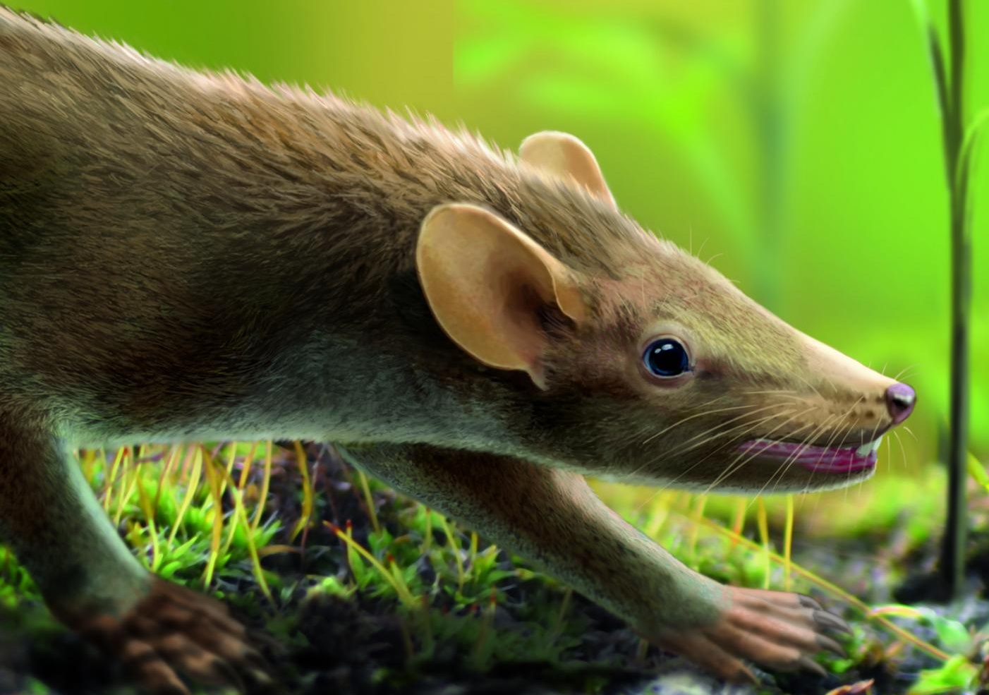 Living reconstruction of the prehistoric mammal Spinolestes in the Cretaceous-period Las Hoyas wetland. Drawing: Oscar Sanisidro. With permission of Nature Publishing Group