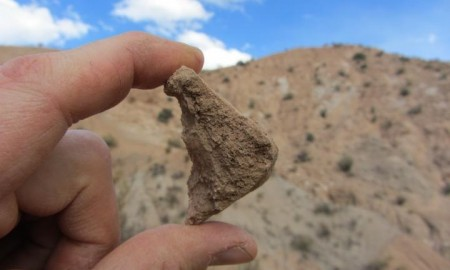 The fossil shell from an extinct tortoise of the genus Chelonoidis, found near Quebrada Honda, Bolivia, is among the fossils suggesting the Altiplano was less than a kilometer in altitude 13 million years ago. CREDIT Darin Croft