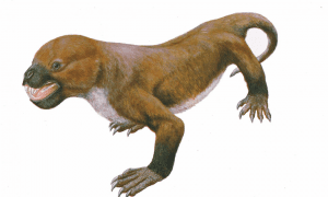 Tritylodontids are the last known family of near-mammalian reptiles, before mammals with features such as advanced hearing evolved. Researchers have uncovered dozens of fossilized teeth in Kuwajima, Japan and identified this as a new species of tritylodontid. This suggests that tritylodontids co-existed with some of the earliest mammal species for millions of years. CREDIT Seishi Yamamoto/Hiroshige Matsuoka USAGE RESTRICTIONS