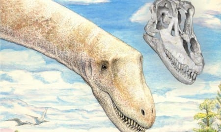 Sarmientosaurus life reconstruction & skull (Mark Klingler & WitmerLab): Life reconstruction of two individuals of the new titanosaurian dinosaur species Sarmientosaurus musacchioi in their ~95 million-year-old habitat in southern Chubut Province, central Patagonia, Argentina, with a digital rendering of the skull in the same position as the head of the foreground individual. CREDIT Mark A. Klingler, Carnegie Museum of Natural History and WitmerLab, Ohio University.