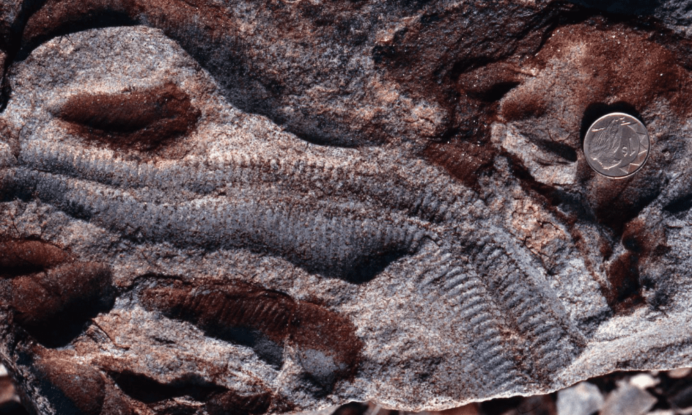 Earliest animals evolved in the mid to late Proterozoic Eon and lie deep in the fossil record. CREDIT Douglas Erwin / National Museum of Natural History