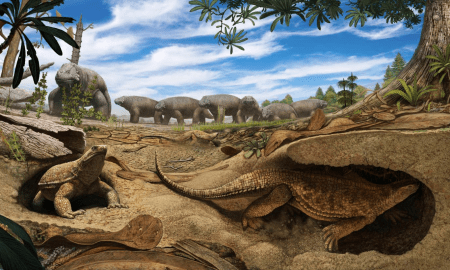 This is an artistic rendering of the early proto turtle Eunotosaurus (foreground) burrowing into the banks of a dried up pond to escape the harsh arid environment present 260 million years ago in South Africa. Meanwhile, a herd of Bradysaurus (background) congregates around the remaining muddy water. CREDIT Artwork by Andrey Atuchin