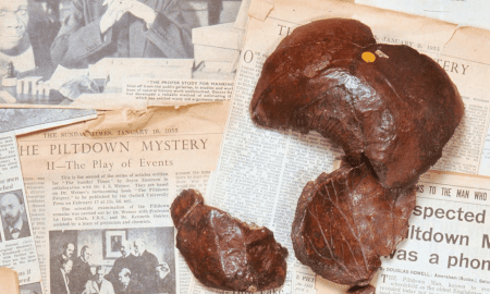 The faked fossilized remains of Piltdown man (stained to look old), newspaper articles from the 1950s exposing the fraud. Inset: Charles Dawson, who the new article claims is probably the sole fraudster. CREDIT Natural History Museum